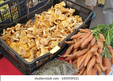 Yellow chanterelle (cantharellus cibarius). Chanterelle mushrooms is a species of golden chanterelle mushroom in the genus Cantharellus. Fresh organic mushrooms on a farmer market with carrots.