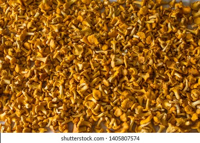 Yellow chanterelle (cantharellus cibarius) on rustic wooden background