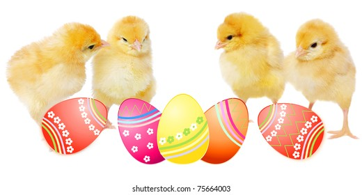 yellow chickens and colorful eggs, isolated on white