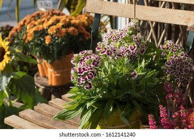 Yellow chrysanthemums and field carnations for sale at the entrance to the flower shop
