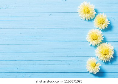 yellow chrysanthemums on blue wooden background