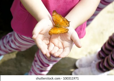 Yellow colored butterfly hop at young girl's hand.