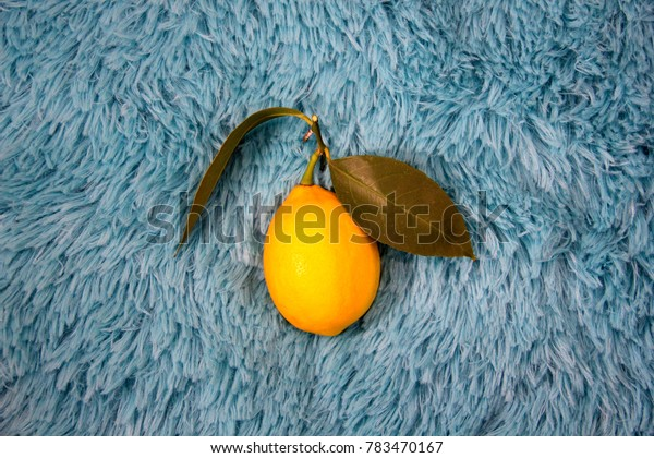 Yellow colorful lemons with green leafs in the center side of the bright cyan fur horizontal