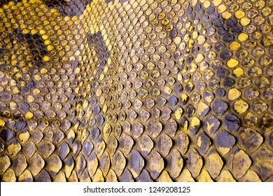 Yellow Coloured Real Snake Skin Snakeskin Animal Print Background