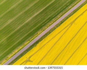 Yellow colza field and green corn aerial view directly from above