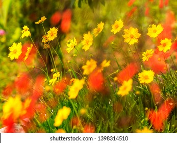 Yellow Coreopsis Daisies floers with blurred red flowers along a world peace pagoda garden in Nepal