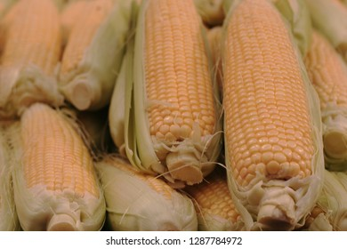 Yellow corn cobs with husks