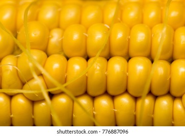 yellow corn kernels in the cob as a background