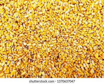 Yellow Corn Seed Grain Background Texture for a Sensory Pit or Activity