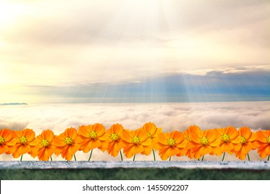 yellow cosmos flower with blue sky and sunrise