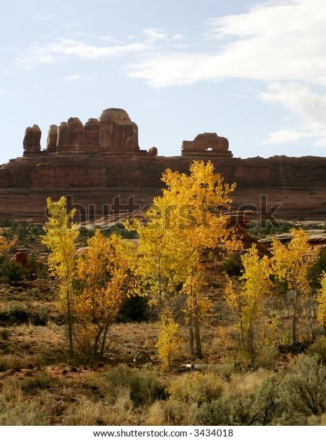 Yellow cottonwoods in fall, Canyonlands National Park, Utah, USA