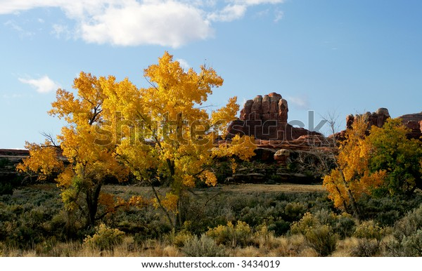 Yellow cottonwoods in fall, Canyonlands National Park, Utah, USA