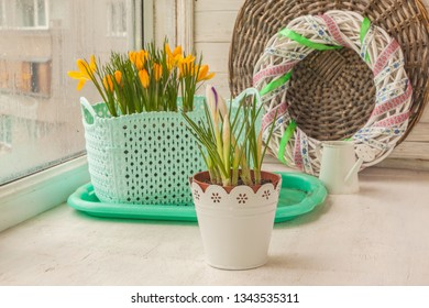 Yellow crocuses in flower pots and a decorative watering can on the window