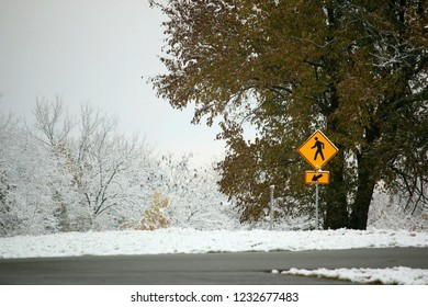 A yellow Crosswalk sign against a place covered in snow with trees in the background and a huge tree next to it. The ground is covered in snow and a road is visible.