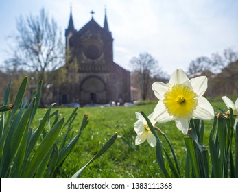 Yellow Daffodil flower Narcissus with lush green grass at early spring day at Karlinske namesti square park with gothic church and trees, blue sky background, Prague, Karlin