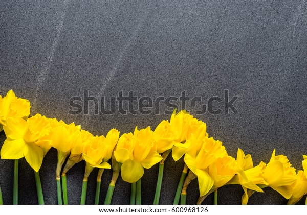 Yellow daffodils, spring frame with blossom on dark background