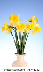 Yellow daffodils in a vase on blue background