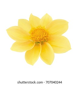 Yellow dahlia head isolated on a white. Detailed retouch.