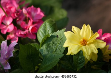 A yellow dahlia and leaves with other flowers in the background