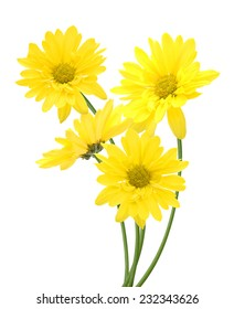 the yellow daisies decoration