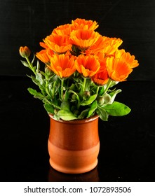 Yellow daisies in a flowerpot over black background