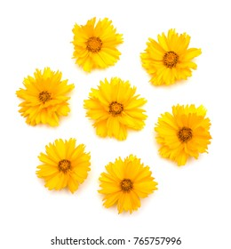 Yellow daisies isolated on a white background. Flowers card. Flat lay, top view