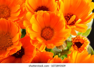 Yellow daisies seen from above, horizontal image