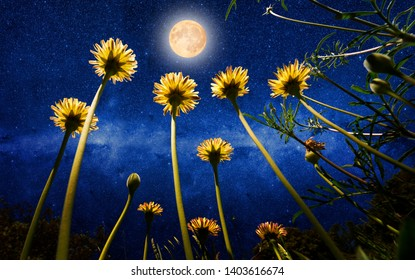 Yellow daisies and the universe with full moon as background