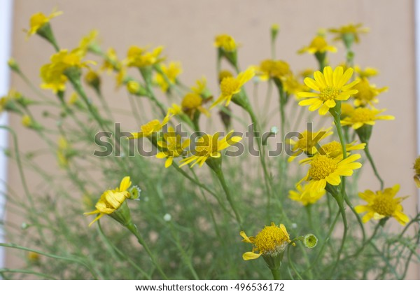 Yellow Daisy Brown Background Stock Photo Edit Now 496536172 Daisy brown is the main character of the series. shutterstock