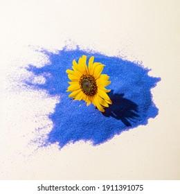 Fleur de marguerite jaune sur fond bleu clair et beige. Ombre du jour ensoleillé. Concept printanier minimal.