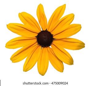 Yellow Daisy Flower Clip Art