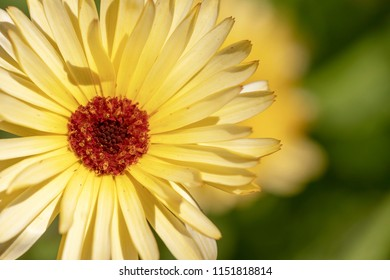 A yellow daisy flower. Image with Copy space