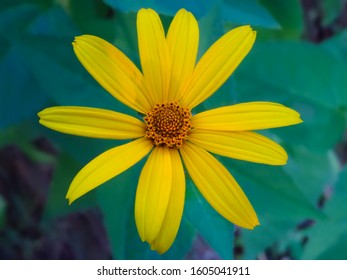 yellow daisy flower on green background