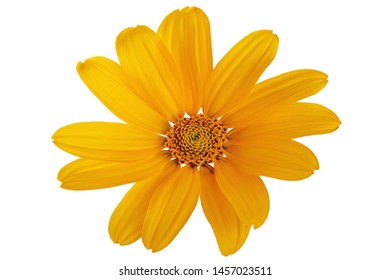 Yellow daisy flower on a white background.