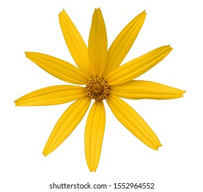 yellow daisy flower on white background isolated petals