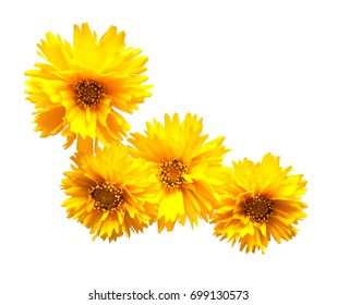 Yellow daisy isolated on a white background. Flowers card. Flat lay, top view