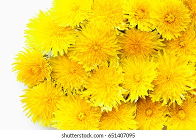 Yellow dandelion background