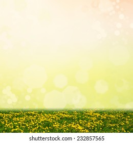 Yellow dandelion flowers on a abstract bokeh background