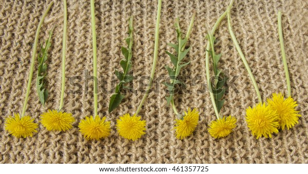 yellow dandelions are in a straight row on the rug of jute