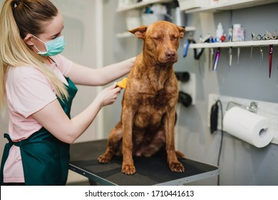 Yellow dog at grroming salon.