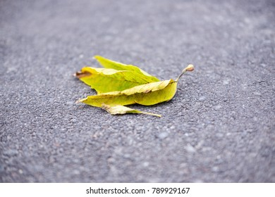 Yellow dry autumn leaf lies on the asphalt