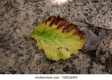 Yellow dry leaves on the floor for background texture.