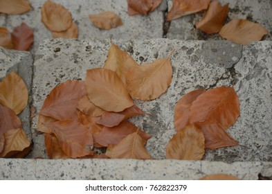 Yellow dry leaves on pavement stairs