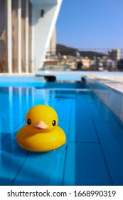 The yellow duck on water.