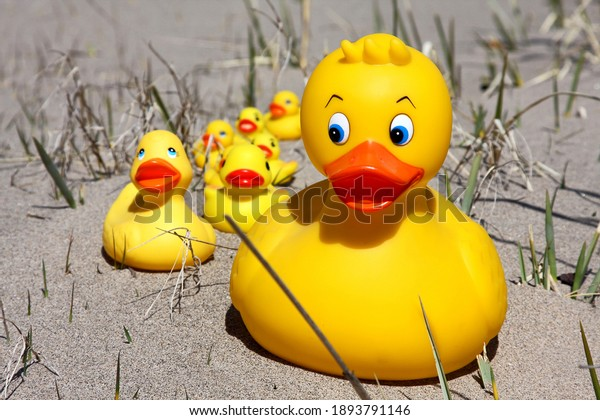 Yellow ducks in sandy grass setting. Large duck in front, leading smaller and smaller yellow rubber ducks.