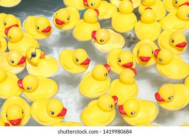 Yellow ducks swimming in the pool