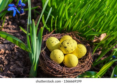 Yellow eggs in nest on green grass.Easter concept