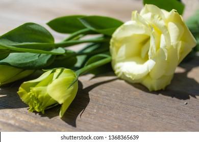 yellow eustoma (lisianthus) flowers on white wooden table