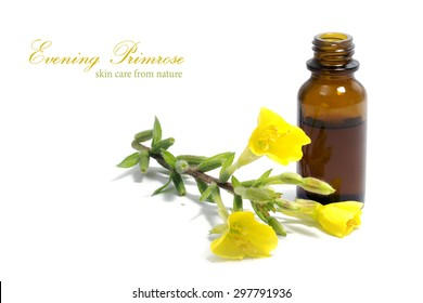 Yellow evening primrose (Oenothera biennis) flowers and a small bottle with oil, cosmetics and natural remedies for sensitive skin and eczema, isolated on a white background, sample text