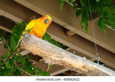 Yellow Exotic Bird